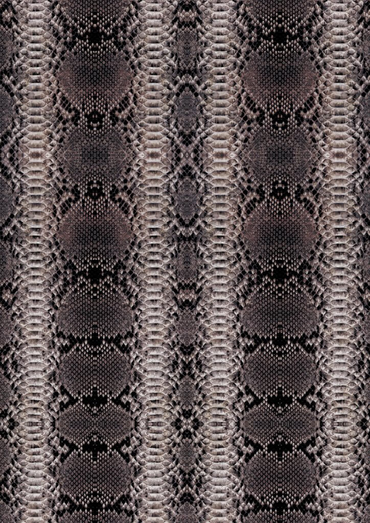 0029 - Snake Skin